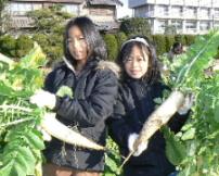 JA 海部東農業協同組合(あまひがし) -方領ダイコン収穫祭