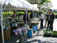 JA 海部東農業協同組合(あまひがし) -お値打ちに花きを即売
