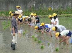 JA 海部東農業協同組合(あまひがし) -米作りで農業体験