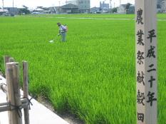 JA 海部東農業協同組合(あまひがし) -献穀に向け生育順調