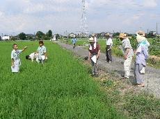 JA 海部東農業協同組合(あまひがし) -病害虫の防除は早めに