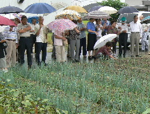 JA 海部東農業協同組合(あまひがし) -越津ねぎのほ場見学など行う