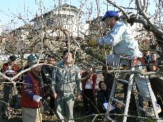 JA 海部東農業協同組合(あまひがし) -カキを中心にせん定・管理方法を学ぶ