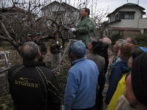 JA 海部東農業協同組合(あまひがし) -せん定で果樹を元気に