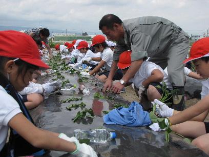 JA 海部東農業協同組合(あまひがし) -サツマイモを植えつけるぞ!