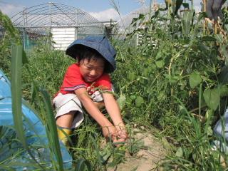 JA 海部東農業協同組合(あまひがし) -「畑の学校」で収穫を体験