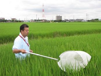JA 海部東農業協同組合(あまひがし) -定点検査でカメムシ被害を呼びかける