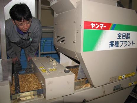 JA 海部東農業協同組合(あまひがし) -平成24年産米 播種作業が始まる