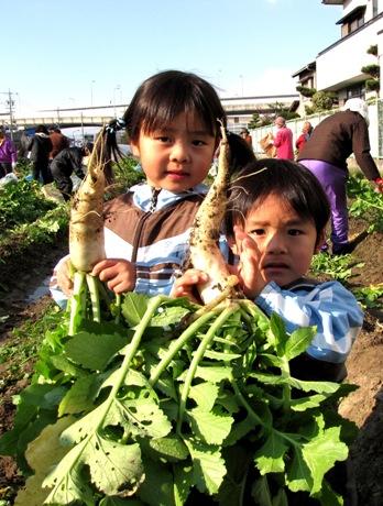 JA 海部東農業協同組合(あまひがし) -伝統野菜「方領大根」の収穫を楽しむ