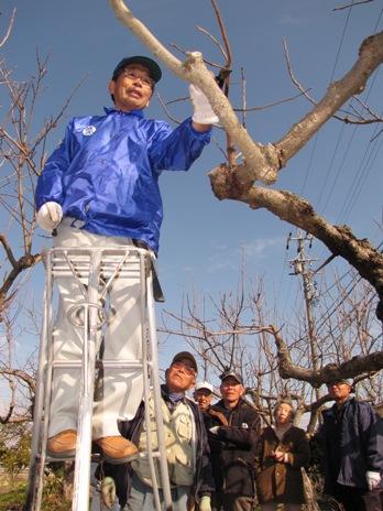 JA 海部東農業協同組合(あまひがし) -果樹の剪定・管理方法を学ぶ