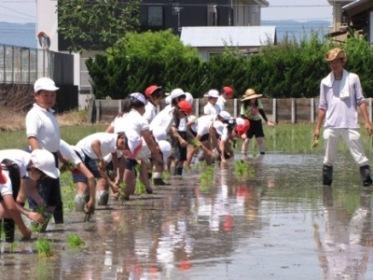JA 海部東農業協同組合(あまひがし) -青年部の指導のもと田植えを体験