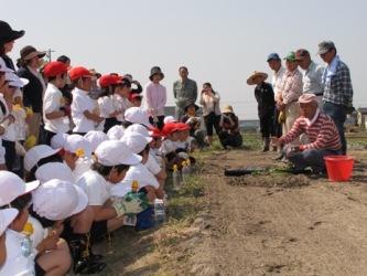 JA 海部東農業協同組合(あまひがし) -サツマイモの定植で農業体験