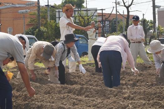 JA 海部東農業協同組合(あまひがし) -伝統野菜「方領大根」の栽培体験を開催