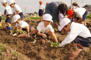 JA 海部東農業協同組合(あまひがし) -小学校児童が農業体験