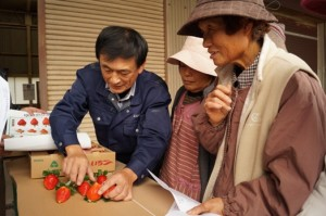 JA 海部東農業協同組合(あまひがし) -甘さが特徴のイチゴが出荷スタート