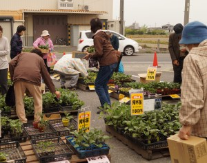 JA 海部東農業協同組合(あまひがし) -新鮮野菜や苗を大売出し!