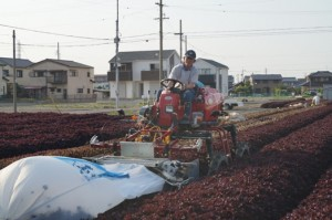 赤しそ収穫機の発明