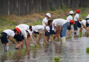 JA 海部東農業協同組合(あまひがし) -青年部が小学生田植え体験に協力