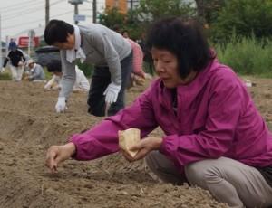 JA 海部東農業協同組合(あまひがし) -伝統野菜「方領大根」を育てよう