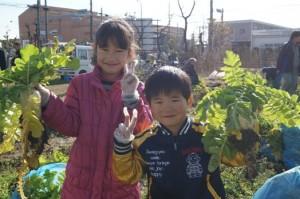 JA 海部東農業協同組合(あまひがし) -伝統野菜「方領大根」の収穫を行う