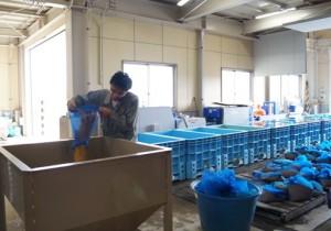 JA 海部東農業協同組合(あまひがし) -平成27年産米の播種始まる