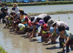 JA 海部東農業協同組合(あまひがし) -親子で米作りを体験