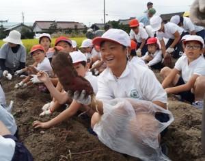 JA 海部東農業協同組合(あまひがし) -みんなで協力して楽しくサツマイモの収穫体験