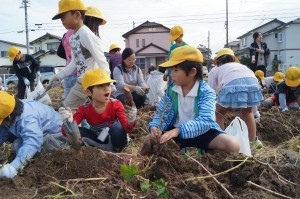 JA 海部東農業協同組合(あまひがし) -小学生児童がサツマイモの収穫体験