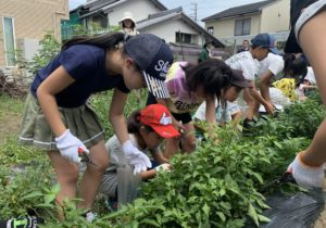 JA 海部東農業協同組合(あまひがし) -子どものうぎょうきょうどうくみあい(JA 海部東Dr e am J r. ) 夏野菜の収穫と料理を体験