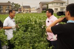 JA 海部東農業協同組合(あまひがし) -チャンカワイさん 大治町特産モロヘイヤに 惚れてまうやろー!