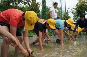 JA 海部東農業協同組合(あまひがし) -田植え体験 青年部が協力