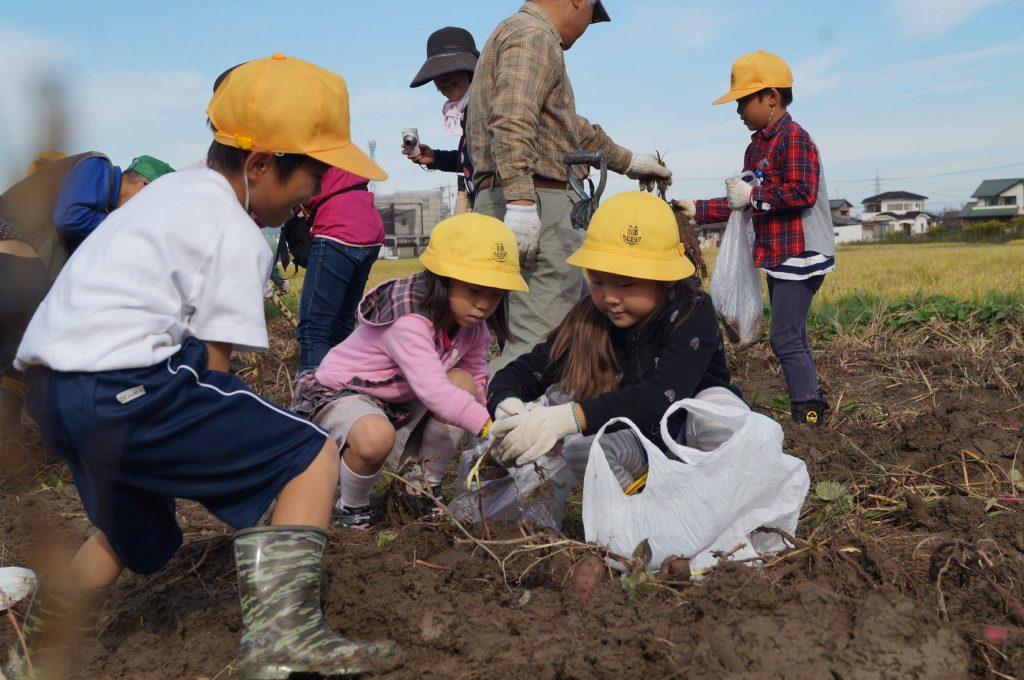 JA 海部東農業協同組合(あまひがし) -農業体験 小学生が収穫を体験