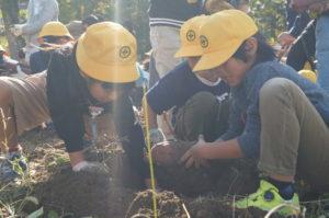 JA 海部東農業協同組合(あまひがし) -青壮年部・伊福保全会 土壌改良により収穫量アップ