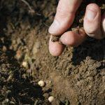 JA 海部東農業協同組合(あまひがし) -次年度に向けた土作りについて