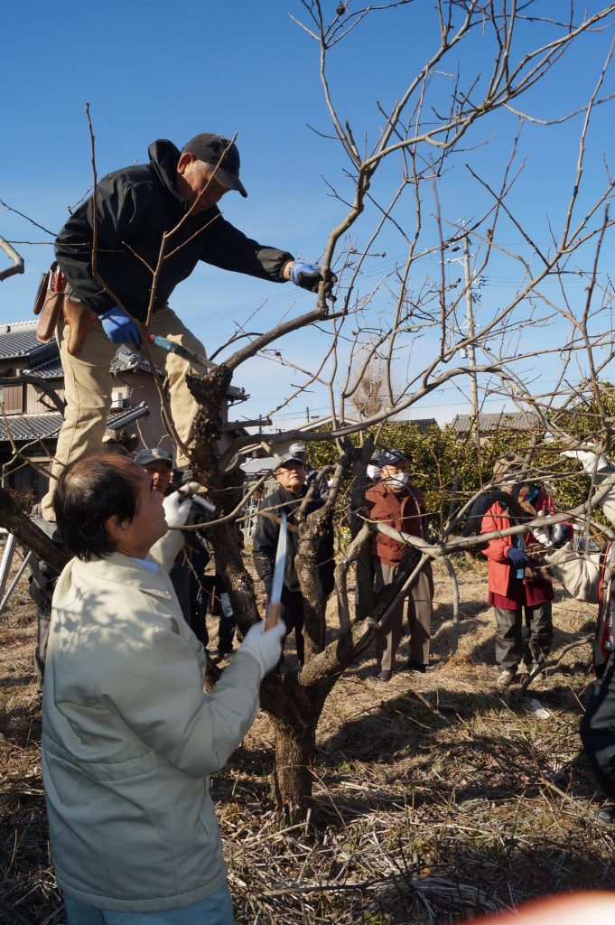 JA 海部東農業協同組合(あまひがし) -神守壮年者友の会 果樹の管理方法・剪定を学ぶ