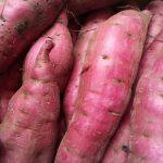 JA 海部東農業協同組合(あまひがし) -サツマイモの収穫・貯蔵の心得