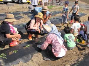 JA 海部東農業協同組合(あまひがし) -親子でサツマイモ栽培体験