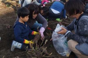 JA 海部東農業協同組合(あまひがし) -大勢で収穫 親子で芋掘り