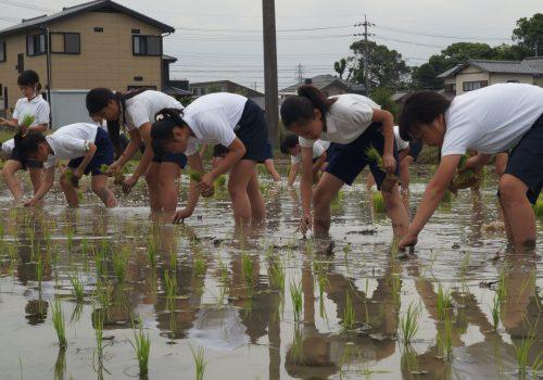 JA 海部東農業協同組合(あまひがし) -田植体験 お米を作る大切さを学ぼう