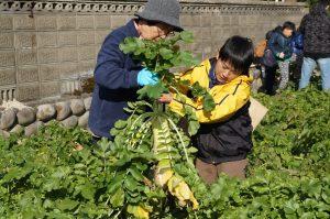 JA 海部東農業協同組合(あまひがし) -親子野菜作り体験 親子で旬の野菜を収穫