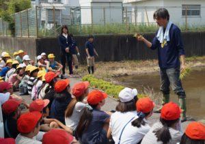 JA 海部東農業協同組合(あまひがし) -青壮年部が田植え体験に協力