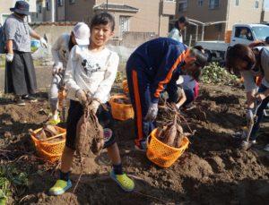 JA 海部東農業協同組合(あまひがし) -子どものうぎょうきょうどうくみあい サツマイモを収穫