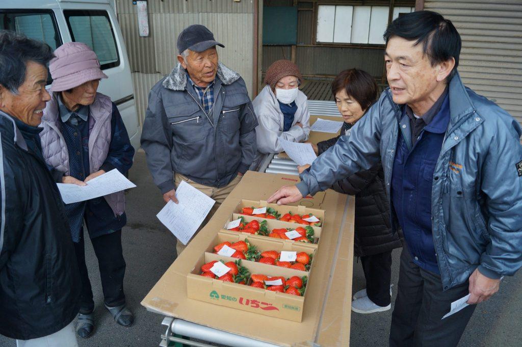 JA 海部東農業協同組合(あまひがし) -神守いちご生産組合 着色と果形の規格確認