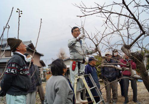JA 海部東農業協同組合(あまひがし) -果樹の管理方法・剪定を学ぶ