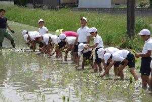 JA 海部東農業協同組合(あまひがし) -田植え体験 各支店が田植え体験に協力