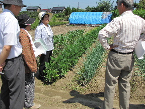 JA 海部東農業協同組合(あまひがし) -伝統野菜作りを広げよう