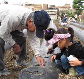 JA 海部東農業協同組合(あまひがし) -伝統野菜の種まきを体験