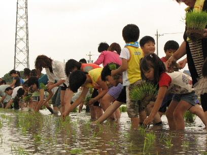 JA 海部東農業協同組合(あまひがし) -どろんこでも楽しい!田植え体験
