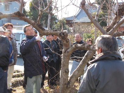 JA 海部東農業協同組合(あまひがし) -せん定学び果樹を元気に!