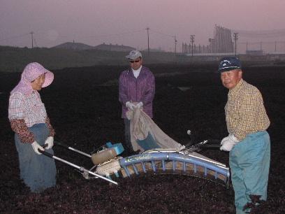 JA 海部東農業協同組合(あまひがし) -ジュースやふりかけにも試してみて